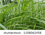 green leaves plant natural... | Shutterstock . vector #1108062458