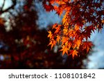autumn is one of the most... | Shutterstock . vector #1108101842