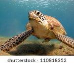 green turtle  chelonia midas ... | Shutterstock . vector #110818352