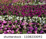 big flowerbed with many tulips... | Shutterstock . vector #1108233092