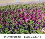landscape view of a beautiful... | Shutterstock . vector #1108233146