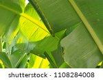 banana leaf green tropical... | Shutterstock . vector #1108284008