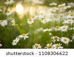 beautiful white yellow...   Shutterstock . vector #1108306622