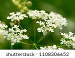 spring blossom background....   Shutterstock . vector #1108306652