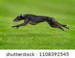 greyhound runnding over grass | Shutterstock . vector #1108392545