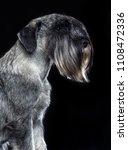 mittelschnauzer dog  isolated ... | Shutterstock . vector #1108472336