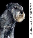 mittelschnauzer dog  isolated ... | Shutterstock . vector #1108472702