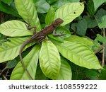 wild life in jungle | Shutterstock . vector #1108559222