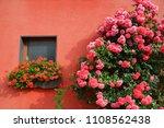 Beautiful Flowering Rose Bush...