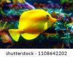 little cute yellow fish... | Shutterstock . vector #1108642202