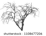 the branches of trees and trees ...   Shutterstock . vector #1108677206