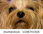 my dog is in a naughty moment.... | Shutterstock . vector #1108741565