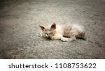 poor and hairless kitten... | Shutterstock . vector #1108753622