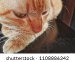 close up. wild cats rest on the ... | Shutterstock . vector #1108886342