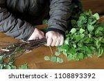 preparation birch broom for the ...   Shutterstock . vector #1108893392