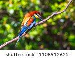 european bee eater   merops... | Shutterstock . vector #1108912625