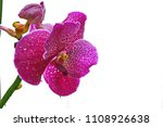 pink orchid and white... | Shutterstock . vector #1108926638