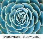 miniature succulent plants ... | Shutterstock . vector #1108949882