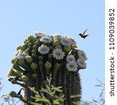 A Hummingbird Is Flying Near...