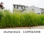 Very Tall Grass Of Vacant...