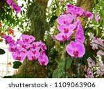 orchids flower  orchids closed... | Shutterstock . vector #1109063906