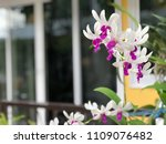 orchid flowers with blurred... | Shutterstock . vector #1109076482