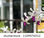 orchid flowers with blurred... | Shutterstock . vector #1109076512