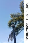 streetlamp and palm leaves | Shutterstock . vector #1109113106