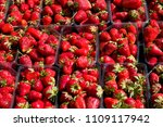 fresh red strawberry in the... | Shutterstock . vector #1109117942