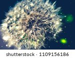 close up of a cap of white... | Shutterstock . vector #1109156186