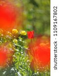 tulips on the flowerbed in... | Shutterstock . vector #1109167802
