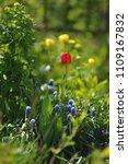 tulips on the flowerbed in... | Shutterstock . vector #1109167832