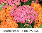 Colorful Flowers  Blooming