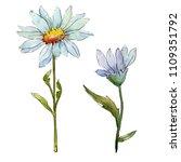 wildflower daisy. floral...   Shutterstock . vector #1109351792
