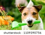 dog with rake cleaning garden... | Shutterstock . vector #1109390756
