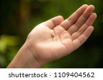 a tiny baby snail on a human... | Shutterstock . vector #1109404562