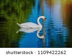 white swan at the lake in... | Shutterstock . vector #1109422262