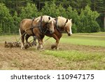 Working Horse In A Farm Field