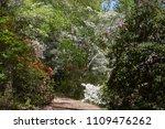 Path Among Flowering Bushes