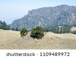 evergreen pine trees and dry... | Shutterstock . vector #1109489972