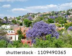 blooming jacaranda trees and... | Shutterstock . vector #1109490365