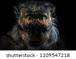 primitive man ape face isolated ... | Shutterstock . vector #1109547218