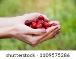 woman holding in hand vitamin... | Shutterstock . vector #1109575286