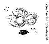 physalis fruit vector drawing.... | Shutterstock .eps vector #1109577965