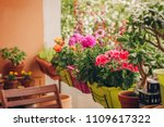 Colorful Flowers Growing In...