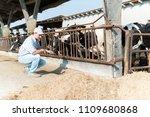breeder in front of his cows | Shutterstock . vector #1109680868