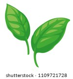 basil leaves vector flat... | Shutterstock .eps vector #1109721728