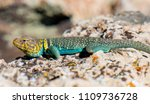 a brightly teal and yellow... | Shutterstock . vector #1109736728