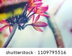 exotic flowers in hawaiian... | Shutterstock . vector #1109795516
