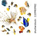 Fish  Reef Fish  Marine Fish...
